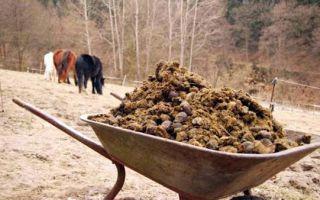 Биотопливо своими руками — оцениваем возможности производства