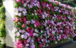 Клумба своими руками — советы по благоустройству участка, самые популярные растения
