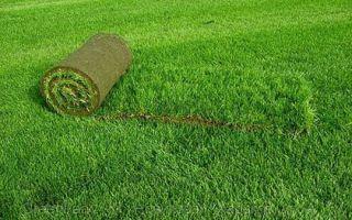 Как выбрать газонную траву для дачи — обзоры, рекоменации, рейтинг