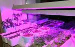 Зимний сад в частном доме — как обустроить? варианты + инструкция