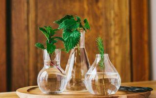 Пересадка комнатных растений — как и когда можно этим заниматься?