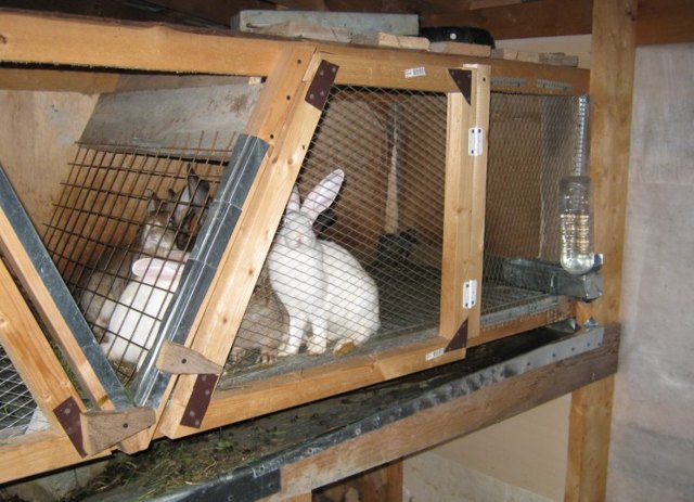 Как построить клетку для кроликов - делаем своими руками