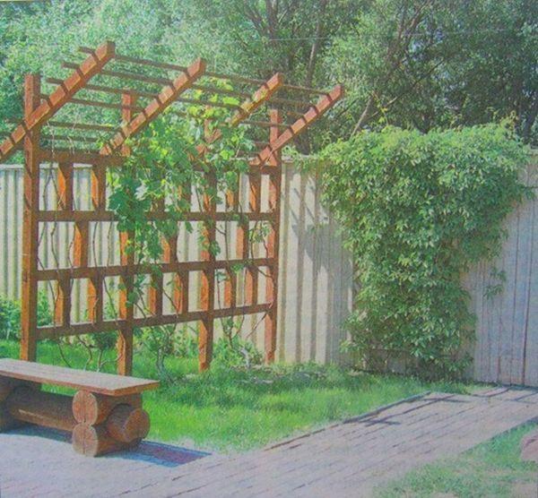 Живая изгородь на даче своими руками - пошаговая инструкция