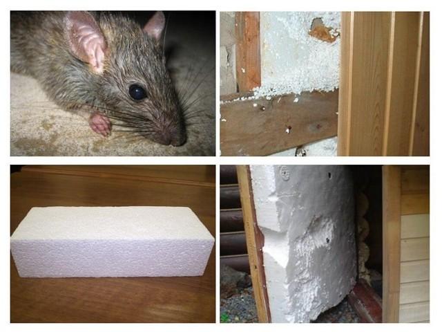 Какой утеплитель не грызут мыши - давайте разберемся