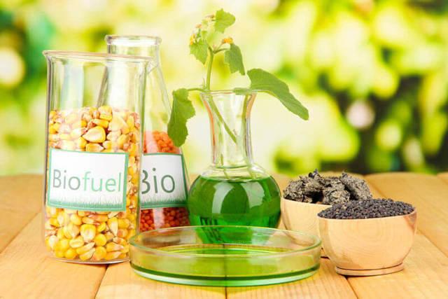 Биотопливо своими руками - оцениваем возможности производства