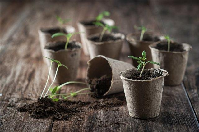 Календарь садовода и огородника на 2020 год: лучшее время для садовых работ