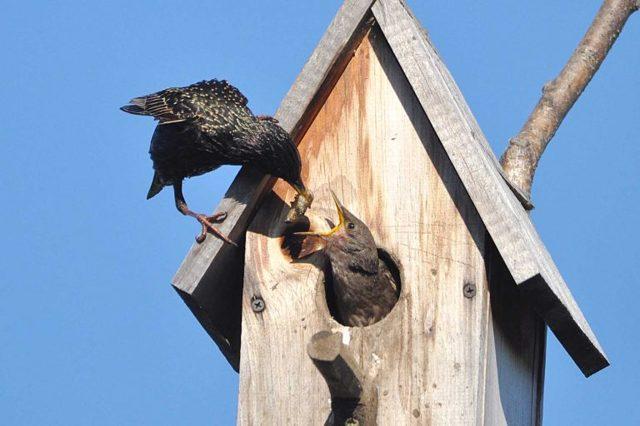 Скворечник для птиц своими руками - несколько несложных вариантов с пошаговыми фото инструкциями