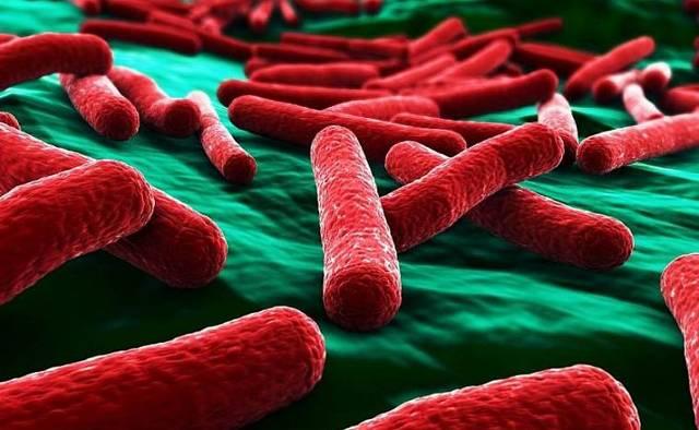 Живые бактерии для септиков - выбор и правила применения
