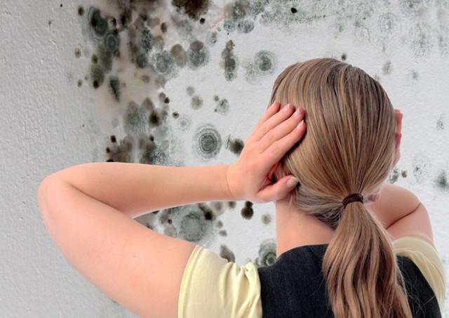 Грибок в ванной комнате как удалить - готовые составы и народные средства для удаления грибка