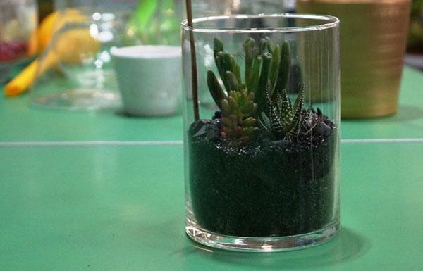 Флорариум — что это и как его сделать своими руками, пошагово