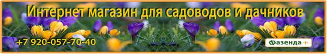 Насос для полива огорода: разновидности, выбор, монтаж