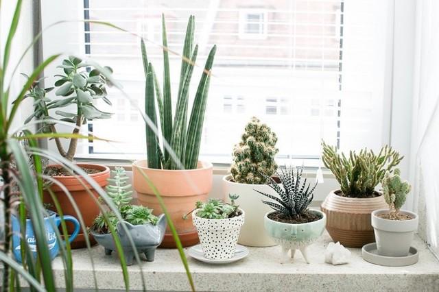 Пересадка комнатных растений - как и когда можно этим заниматься?