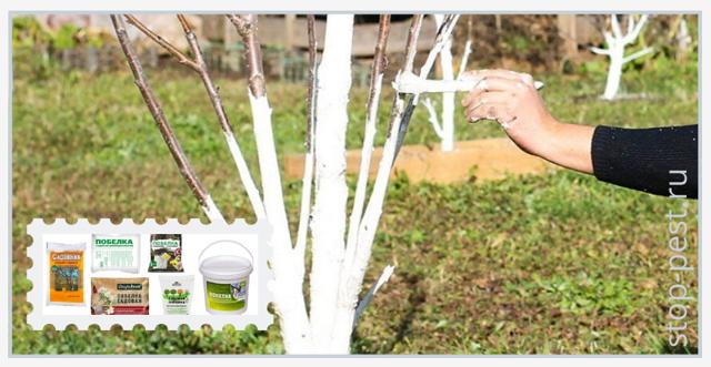 Обработка сада после цветения: как и чем опрыскивать растения?